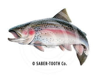 Rainbow Trout Fish Decal Sticker