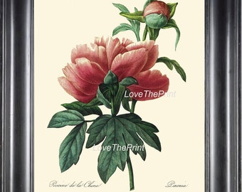 Botanical Print R26 Wall Art Beautiful Large Pink Red Peony Spring Summer Garden Nature Antique Home Interior Design Wall Decor to Frame