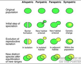 24x36 Poster; Speciation Mechanisms Of Speciation Evolution