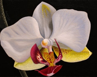 Orchid original acrylic painting flower