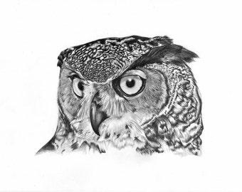Owl Pencil Drawing Print