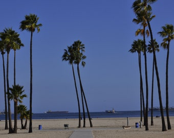 Beach and palm tree photograph