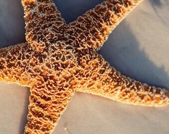 starfish photography, beige home decor,  beach cottage art, beach photography, travel decor, nature photo, starfish on the sand
