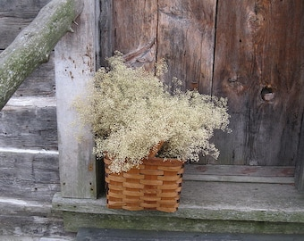"Shop ""dried flowers"" in Craft Supplies & Tools"