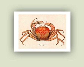 Crab print, Ocean art, crab art,  crab decor, Nautical Art Print, beach cottage decor, seaside decor, educational print, Matte Print 5x7