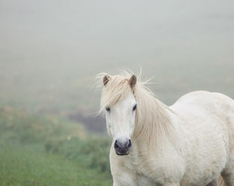"White Horse in Fog, Nature Photography, Horse Art, Iceland, Nature Art Print  - ""On a Pale Horse"""
