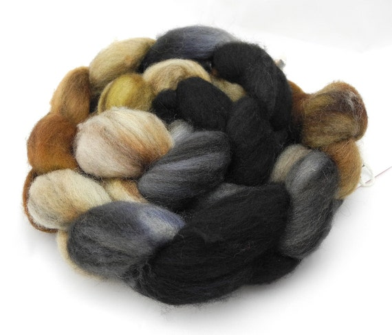 Queen's Tea - Hand Dyed Roving - Spinning Fiber - BFL - Falkland - Shetland - Targhee- Cheviot - Dyed to Order