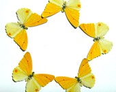 24 Yellow Orange Dot Butterfly Paper Embellishment For diy wedding, diy school kit, diy butterfly cupcake topper, butterfly props, DIY ACEO