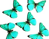 24 Teal Butterfly Paper Embellishment For  scrapbooking, DIY weddings, baby shower, DIY ACEO, butterfly school kit, butterfly wall decor