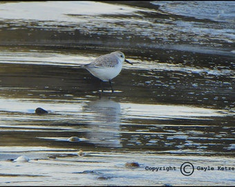 Shore Bird Ocean Sand Photograph--Beach Stroll 2--Fine Art