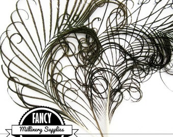 3 - Curled - Peacock Stems - Sprigs - Feathers - Natural