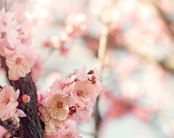 Tree Flowers, Pink Flowering Tree Photography, Cherry Blossoms, Pink Flower Photo,  Pink Nursery Art, Spring Decor, Spring Flower, Wall Art