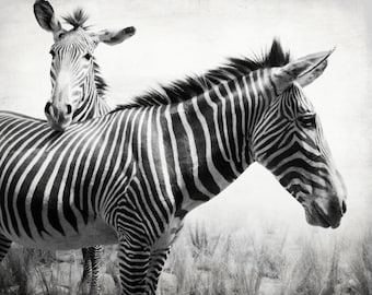 "Zebra photograph animal photography print nature wall art black white kids room decor stripes ""Zebra Stripes"""