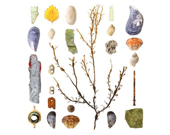 Beachcombing series No.81 - 8 x 8 photograph - seaweed, beach stones, seashells, sea glass