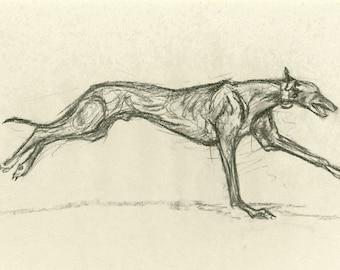 Charcoal Sketch - Greyhound - Print