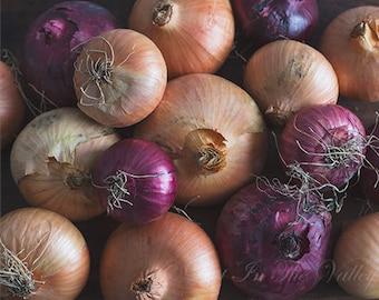 Onion Photo, Food Photography, Kitchen Wall Decor, Food Art, Kitchen Art, Still Life, Fine Art Photograph, Purple, Beige, Rustic Kitchen