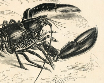 1840s-1850s Antique Engraving of the Lobster