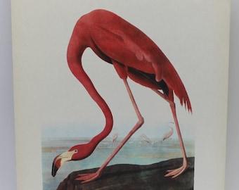 Flamingo image,bird image,antique bird image,Flamingo,home design,man cave, man gift,home decor