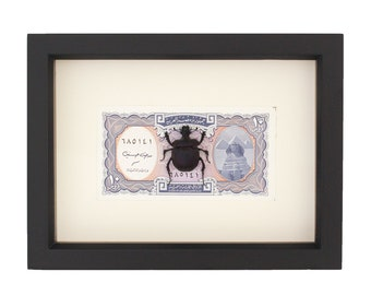 Real Scarab Beetle Framed with Egyptian Money Taxidermy Display