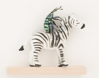Insect Art Real Beetle Display Miniature Zebra Display