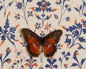 Damask Print with Framed Butterfly