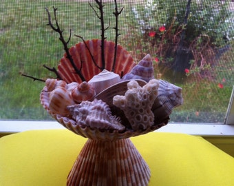 Seashell Ornament Sea Shell Decoration Party Favor  Beach Memories