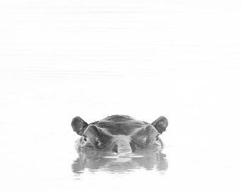 Reflective Hippo in Black and white from South Africa