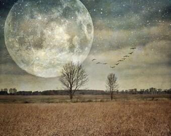 full moon photo, surreal landscape photo, tree photo, home decor, landscape, night sky, farm, autumn, texture, navy, blue, Ontario, birds