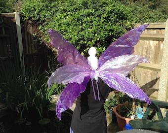 Large adult triple purple iridecent wings.