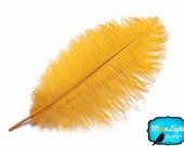 """Wedding Centerpiece, 10 Pieces - 14-17"""" GOLD Ostrich Dyed Drab Body Feathers : 3341"""