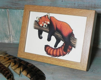 "Red Panda Illustration Framed Mini Print - 6"" x 8"" Oak finish frame"