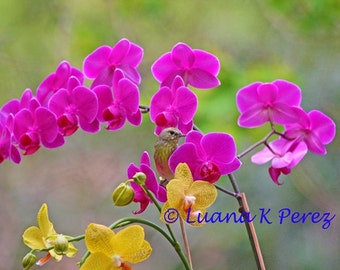 Warbler Posing in Orchids