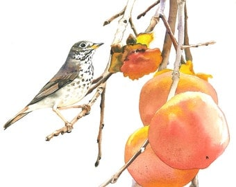 """Limited Edition GICLEE MINI Print / """"Thanksgiving Treat"""" / Watercolor painting of a Hermit Thrush"""