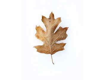 WINTER LEAF- photography print- snow, leaf, fall, autumn, christmas, December, January, New Years