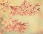 cherry blossom tree print, nature photograph, pink, pastel home decor, Candy Floss, blue yellow girls room wall art, garden photo