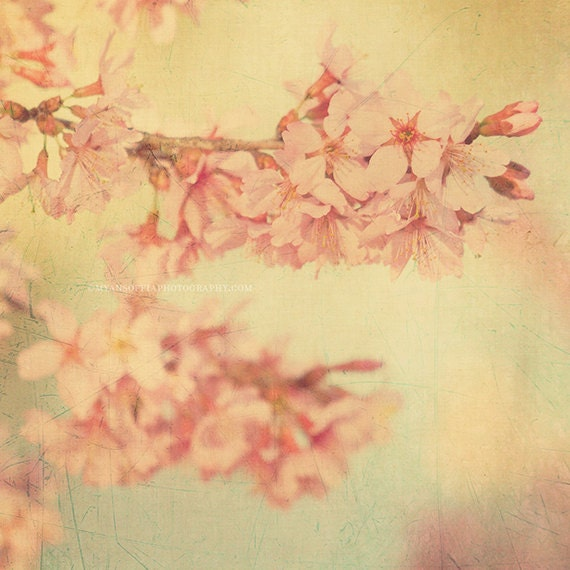 cherry blossom tree print, nature photograph, pink, pastel home decor, Candy Floss, blue yellow girls room wall art, garden photo