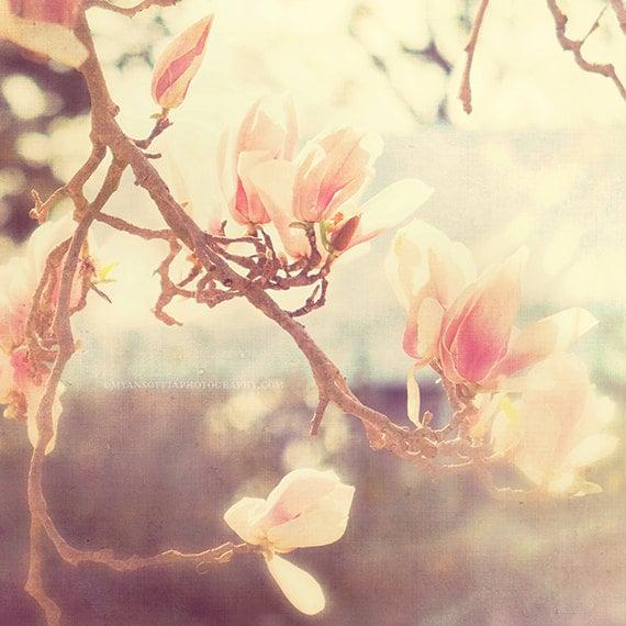 flower photography, magnolia tree photo, Sunshine Smile, spring southern charm, cottage chic, garden soft white pink blue girls room decor