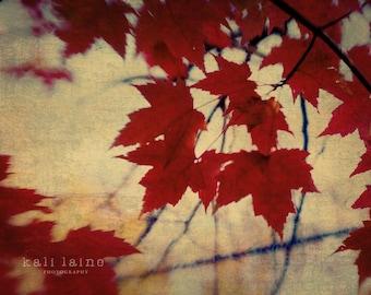 Autumn Leaves - Fine Art Photography Original Print, Red Leaves Nature Abstract Photography Print, Nature Wall Art, Red Yellow Home Decor