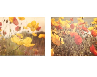 Nature Photography Set, Two Prints, Poppy Flowers, Boho, Flower Photography, Print Set 5x7, 8x10, 11x14, 16x20
