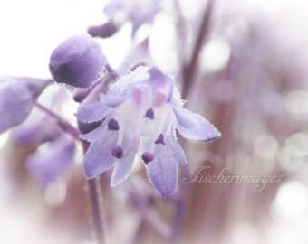 Purple Bell Flower Macro Nature Minimalist Wall Art Home Decor Digital Download or Photo Print Fine Art Photography