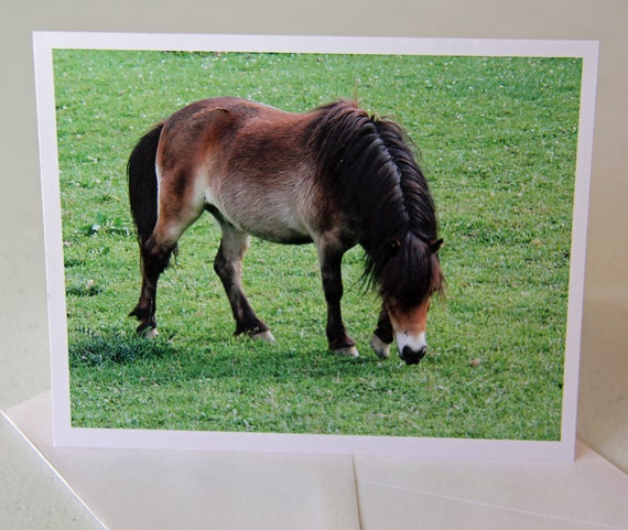 Shetland pony-Pony-Horse-Blank Note cards-Cards-Greeting card-Photography-Print-Photo