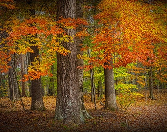 Colorful Leaves in an Autumn by Long Lake in Yankee Springs in Southwest Michigan No.0051- A Fall Fine Art Landscape Photograph