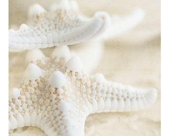 Nature Photography, Shells, Starfish, Macro, Naturals, 5x5 and larger print