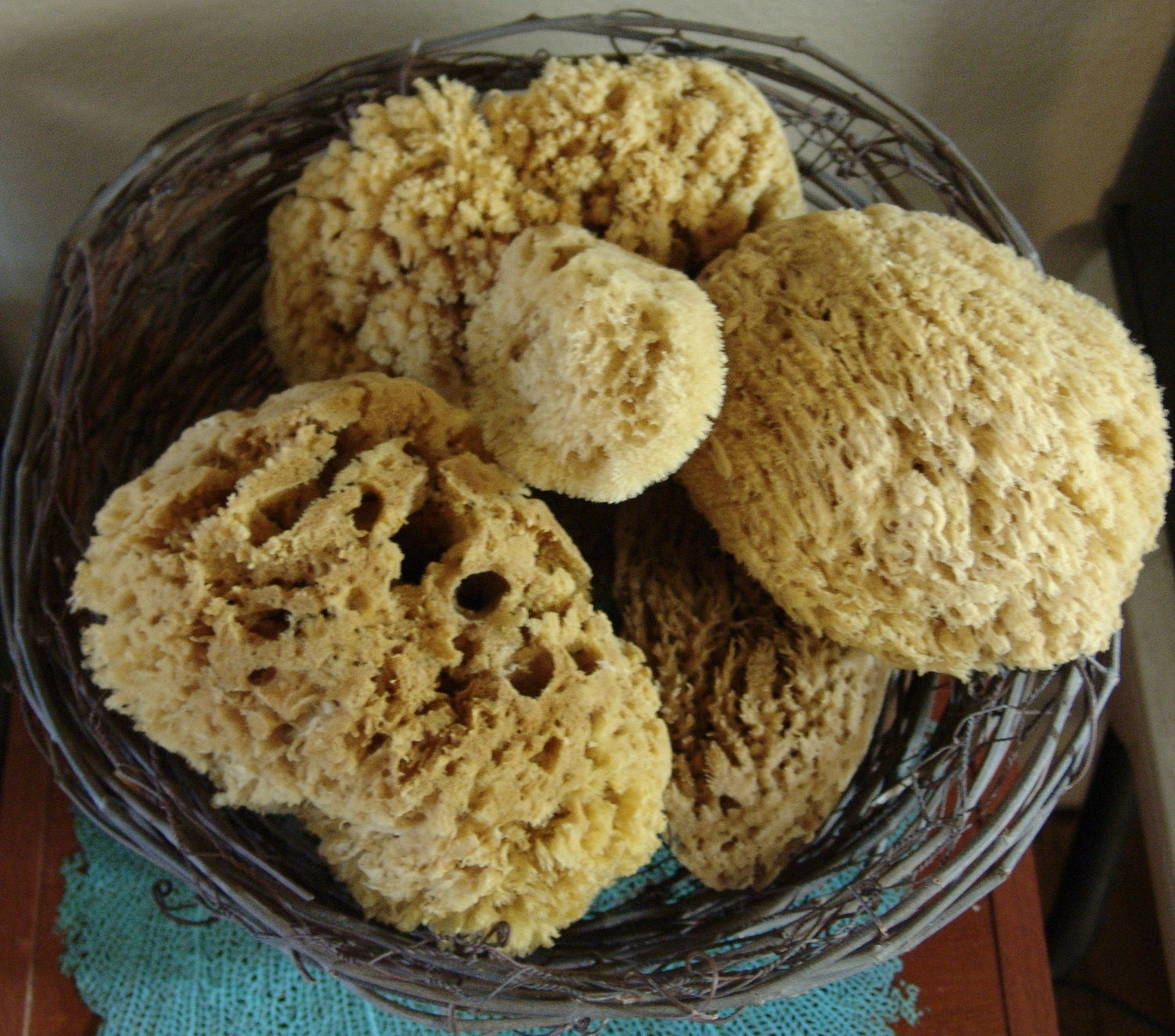Assorted Natural Sea Sponges For Bath Beauty Cleaning Coastal