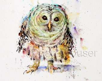 PYGMY OWL Watercolor Print by Dean Crouser