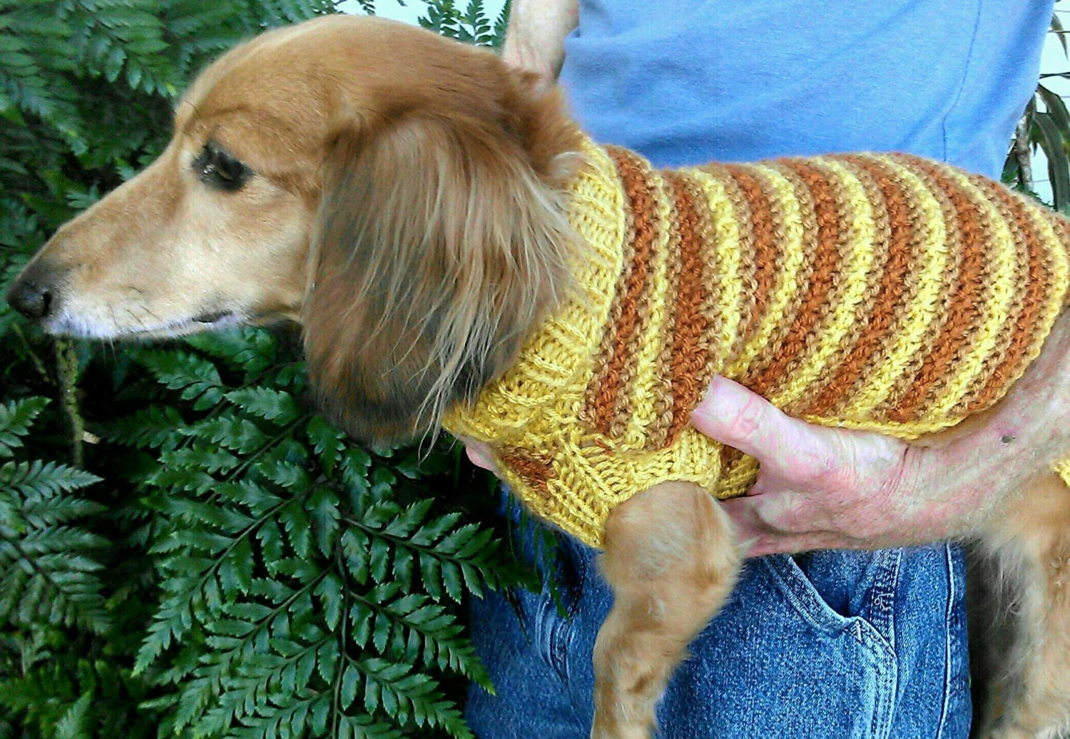 Pdf download knitting pattern lenas textured stripe miniature pdf download knitting pattern lenas textured stripe miniature dachshund sweater bankloansurffo Gallery