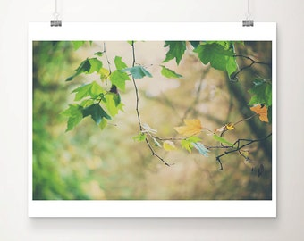 yellow leaf photograph tree photograph fall photograph nature photography green leaf print tree print autumn photograph