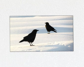 Black Crow Magnet - Black Bird Magnet, Ravens and Crows, Bird Photography Magnet, Corvid, Crow Gift, Nature Magnet, Crow Photo Magnet