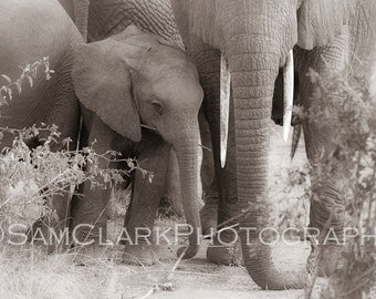 Elephant Mom and baby Photo, Elephant, wildlife photos, Safari animals, jungle animals