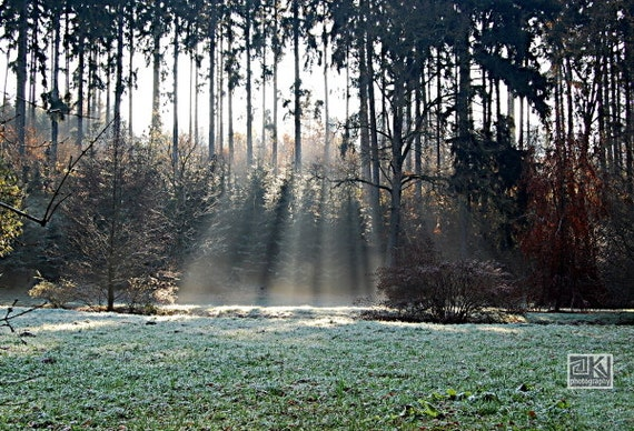 Enchanted forest, Winter photography, Frosty trees, Frozen grass, Ethereal landscape, Trees and Sunbeams, Surreal art, Green wall art,